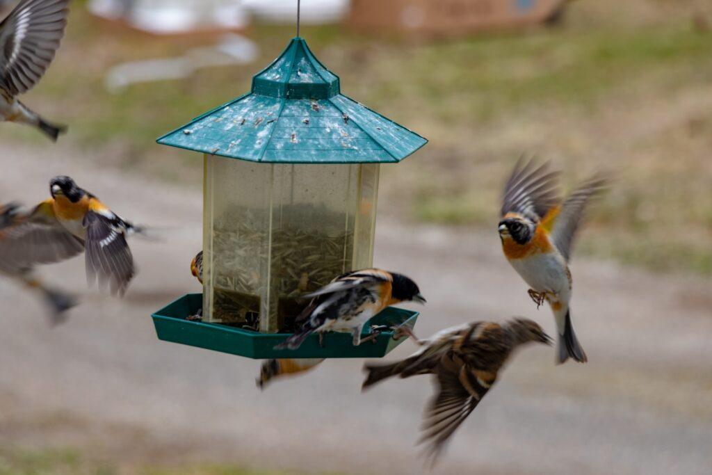 bird near lantern