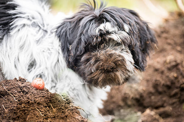 dog mulch
