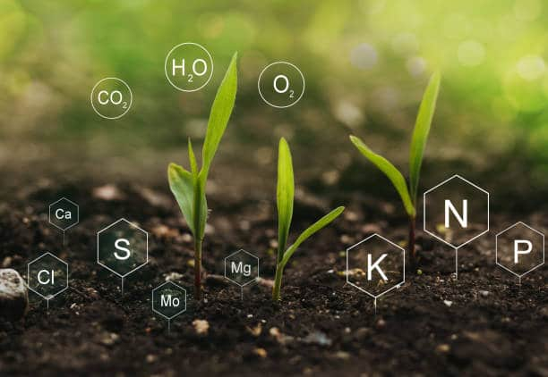 Fertilization and the role of nutrients in plant life.