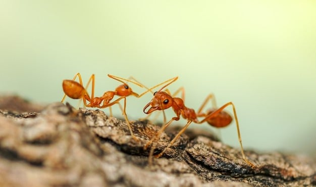 red-ants-walking-trees-ant-behavior_483511-458