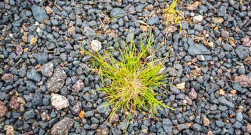 Rocks To Prevent Weeds