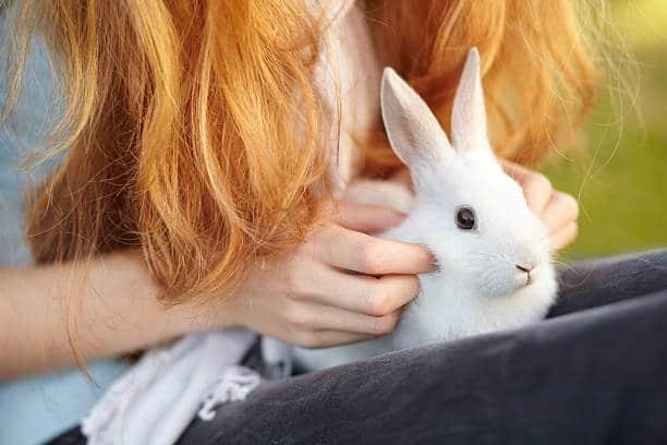 holding rabbit