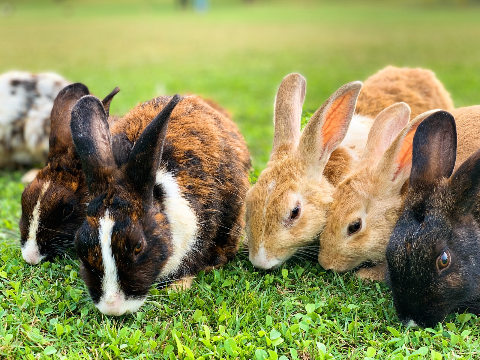 brown and black rabbit on green grass during daytime
