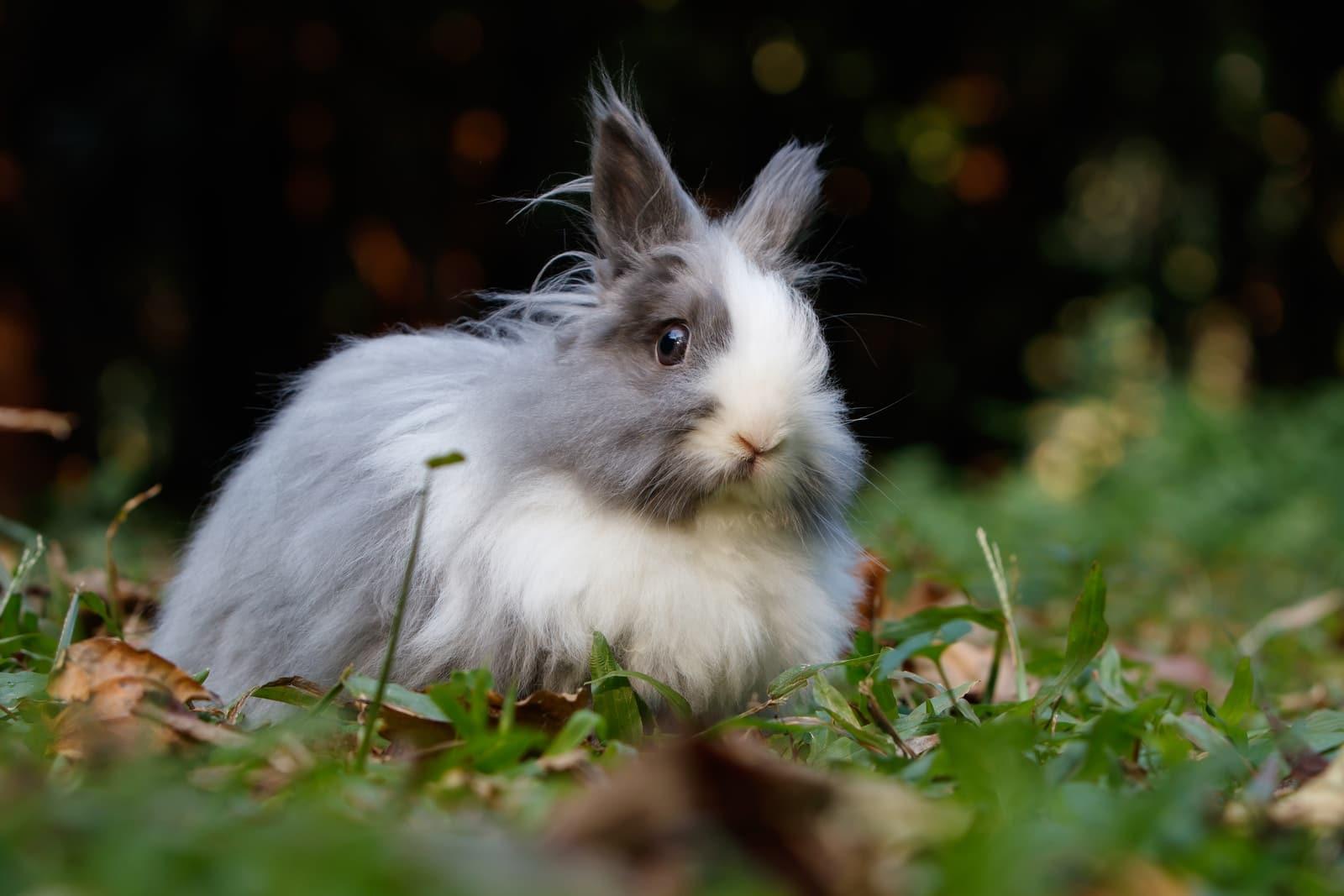 white and grey rabbit on ground